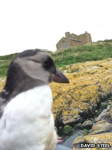 Puffin on Farne Islands