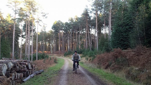 Cyclist in the New Forest