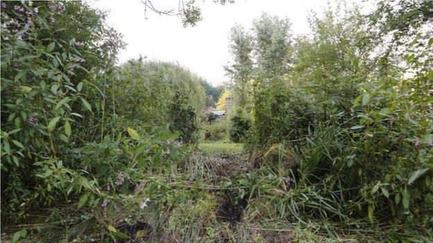 Broken undergrowth