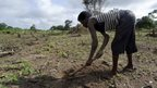 Africa 'needs green revolution'