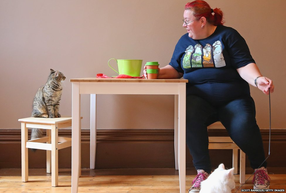 A customer plays with a cat as she drinks a coffee at Cat Cafe Melbourne