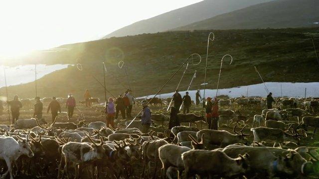 Sami reindeer herders