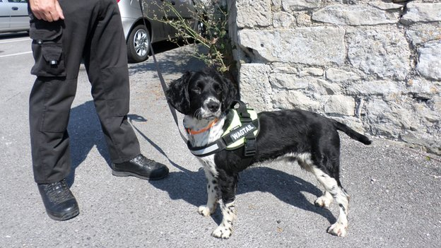 Alfie the black and white sniffer dog was trained and supplied to the operation by Wagtails UK