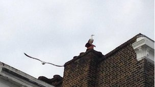 Seagulls in Holloway, London