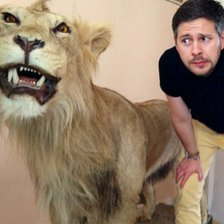 wes and the lion