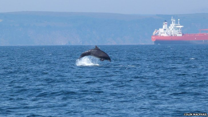 Dolphin swimming in the Moray Firth