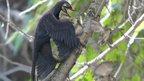 The feathered dinosaur Microraptor pounces on a nest of primitive birds (Sinornis).