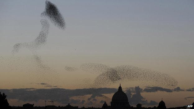 Flock of starlings in the skies above Rome