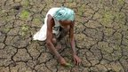 Indian farmer Vangala Anji Reddy works in a parched paddy field at Medak district, some 60km from Hyderabad on 31 July  2014.