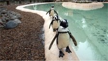 Penguins pictured at London Zoo