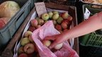 Polish apples at market in Przemysl, 31 Jul 14