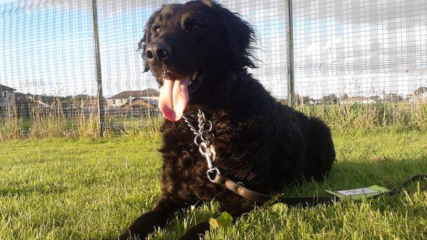 missing guide dog tess
