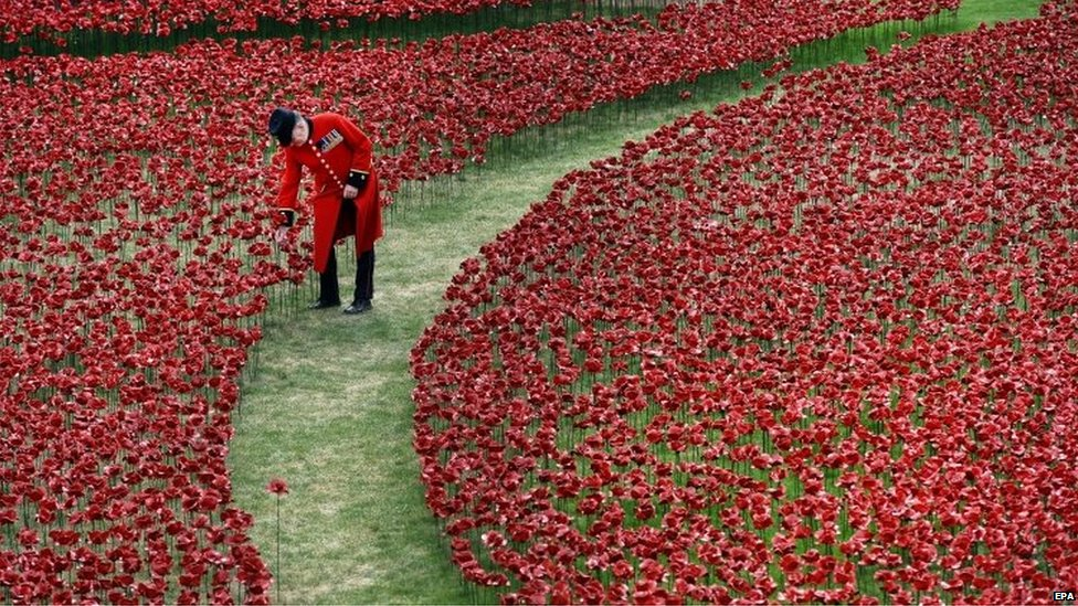 A Chelsea Pensioner walks amongst red poppies in the moat at the Tower of London in London, Britain. The Tower of London moat is slowly turning red as some 888,246 ceramic poppies are planted in memory of the British and Commonwealth dead from World War I.