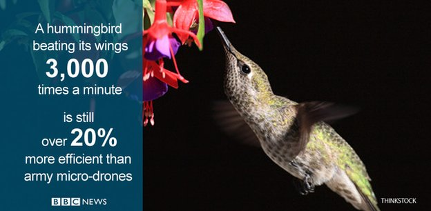 Hummingbirds edge out helicopters in hover contest