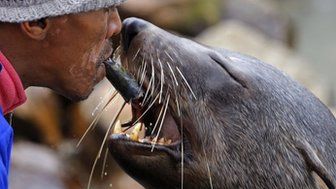A man feeds a sea lion in  Cape Town, South Africa, 26 July 2014