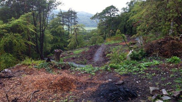 Plas Tan y Bwlch gardens (August 2, 2014)