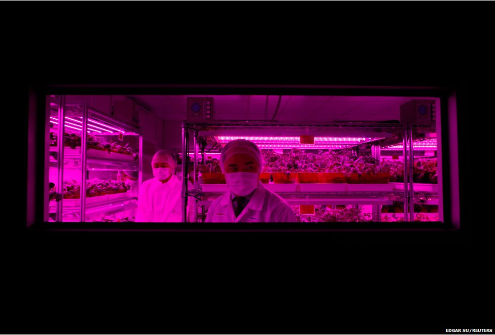 Themanager of the Agriculture Business Unit Alfred Tham gives a tour of Panasonic's first indoor vegetable farm at their factory in Singapore