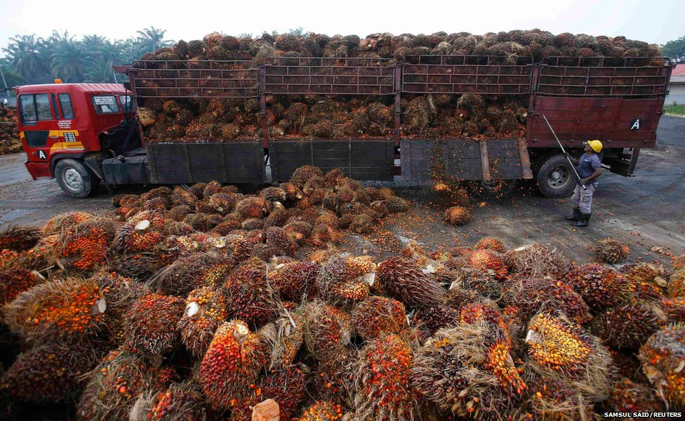 A worker unloads palm oil fruits from a lorry inside a palm oil factory in Salak Tinggi, outside Kuala Lumpur
