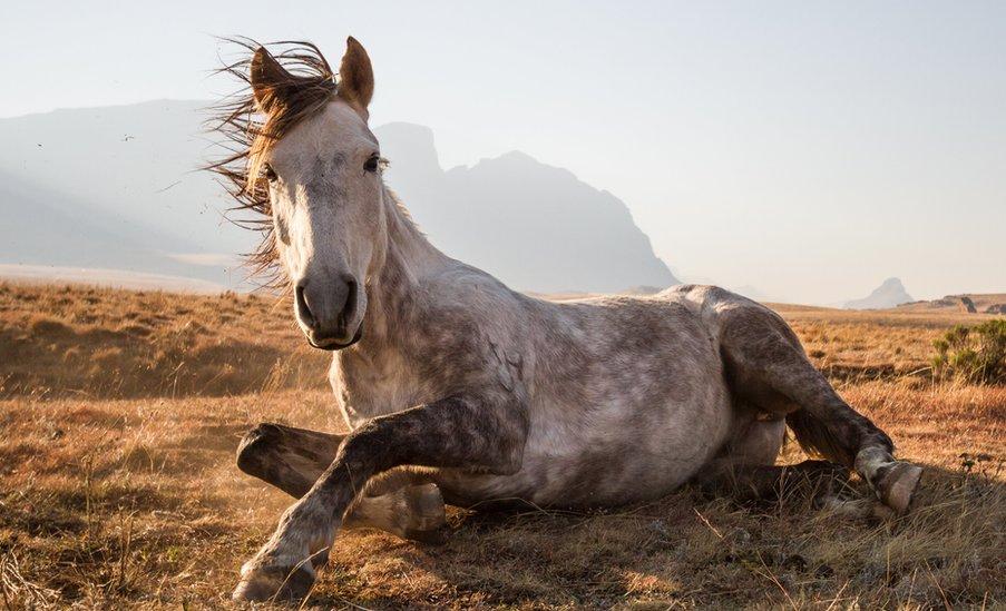 2014 National Geographic Fotoğraf Yarışmasından En İyi 10 Fotoğraf