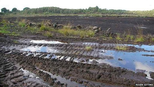 Lindow Moss, where the bog body was found