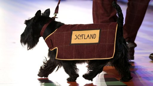 Hamish the Dog in a red coat with the word Scotland on it