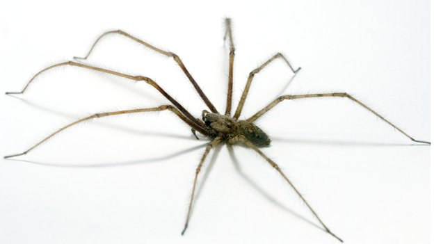 House fire after owner set spider alight bbc news for How to get rid of spiders in the house uk