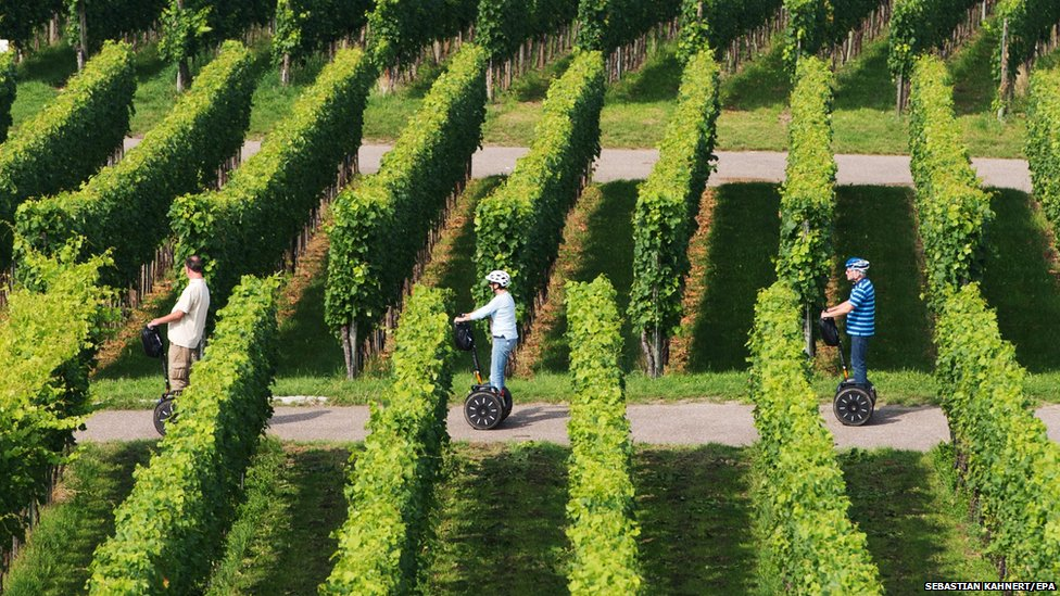 Participants on a Segway tour drive along rows of grapevines near Fellach, Germany