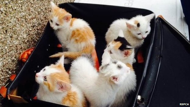 kittens found in suitcase