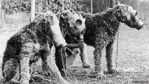 Gas mask dogs
