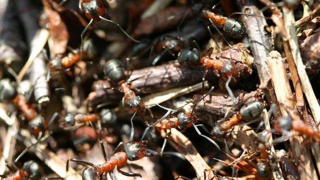 An ants' nest