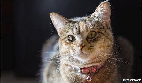 A cat wearing a bell on its collar