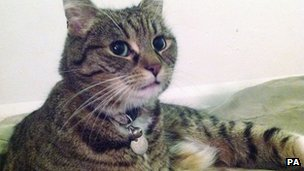 Freya the Cat