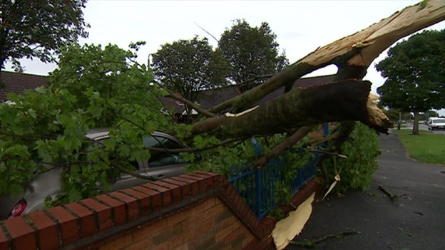 Car crushed by fallen tree in Hull