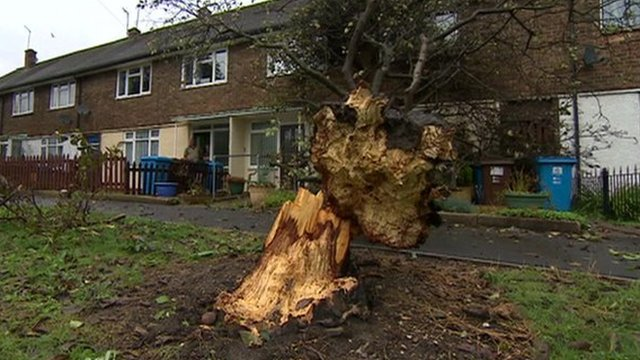 Tree blown over in Hull storm