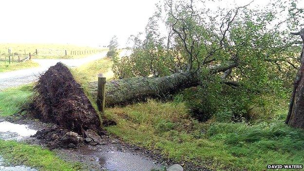 Tree down in Kildrummy
