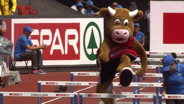 Mascot cow shows off hurdle jumps