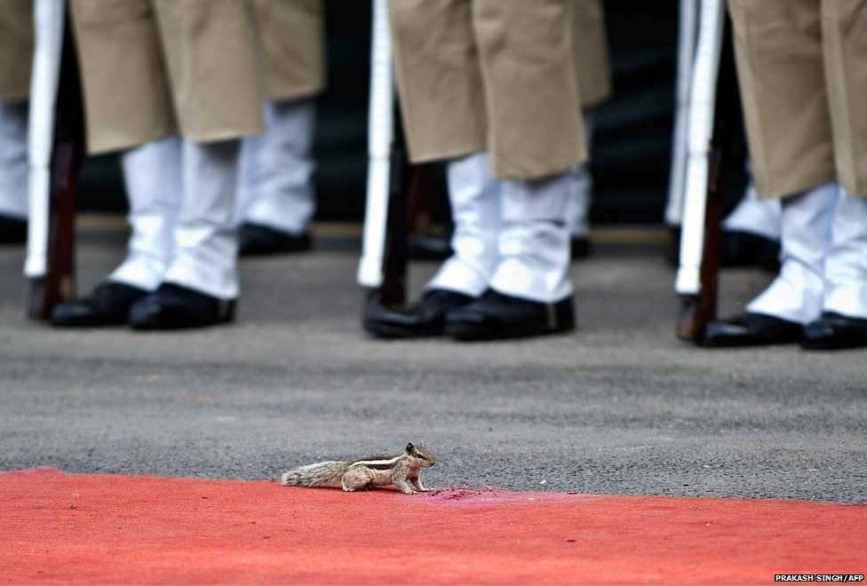 A squirrel runs in front of the guards of honour lined up during a full dress rehearsal for the 68th Independence Day celebrations at the Red Fort in New Delhi, India