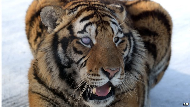 New York has banned posing with big cats in photos