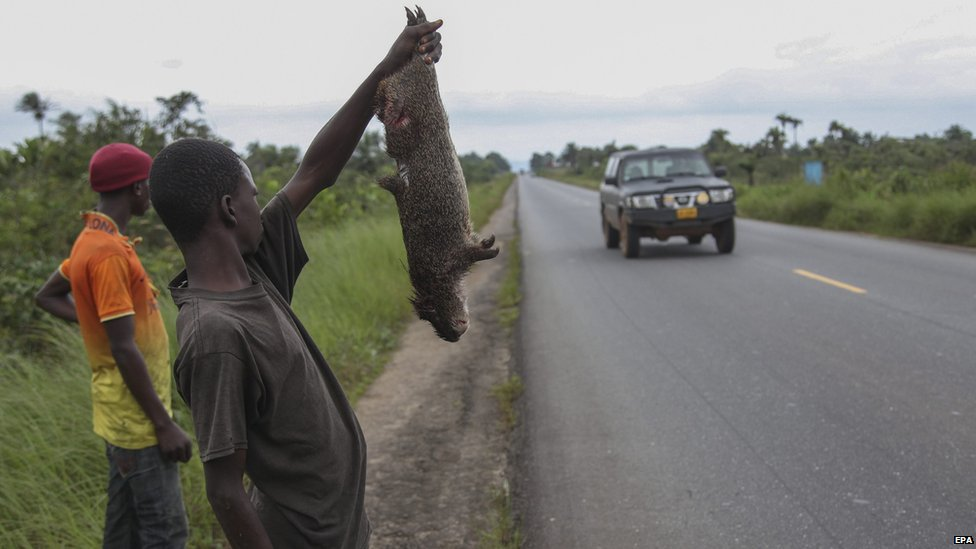 A Liberian man holds up a bush hog for sale as bush meat along the airport highway in Margibi County, Liberia 13 August 2014