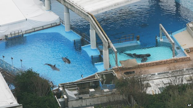 Killer whales swim in tanks at the SeaWorld park in Orlando, Fla. on Wednesday, Feb. 24, 2010