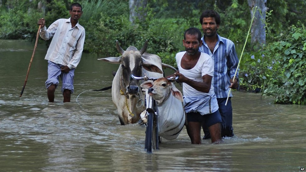 Villagers carry their bicycles and cattle across flooded waters in India, 18 August 2014.