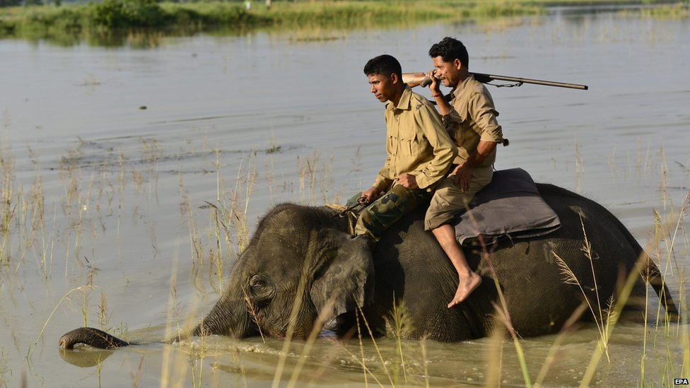 Men patrol the area of a village in India on the back on an elephant, 17 August 2014.