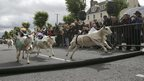 Moffat sheep races