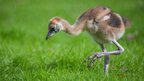 A baby crane