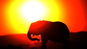 An elephant eats at sunset in Addo Elephant Game Reserve near Port Elizabeth in South Africa