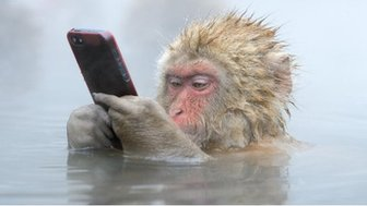 A tourist unwittingly lost his iPhone to this cheeky Japanese Macaque.