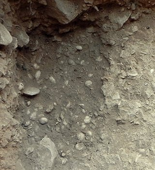 Shells in pit