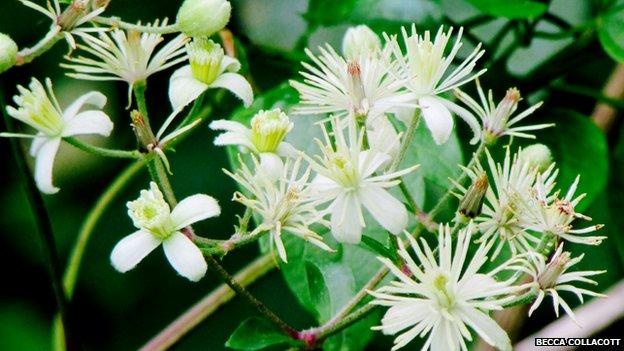 Flower in Abingdon