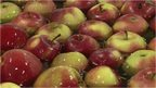 Polish apples