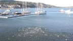 Mackerel chasing whitebait off Lyme Regis